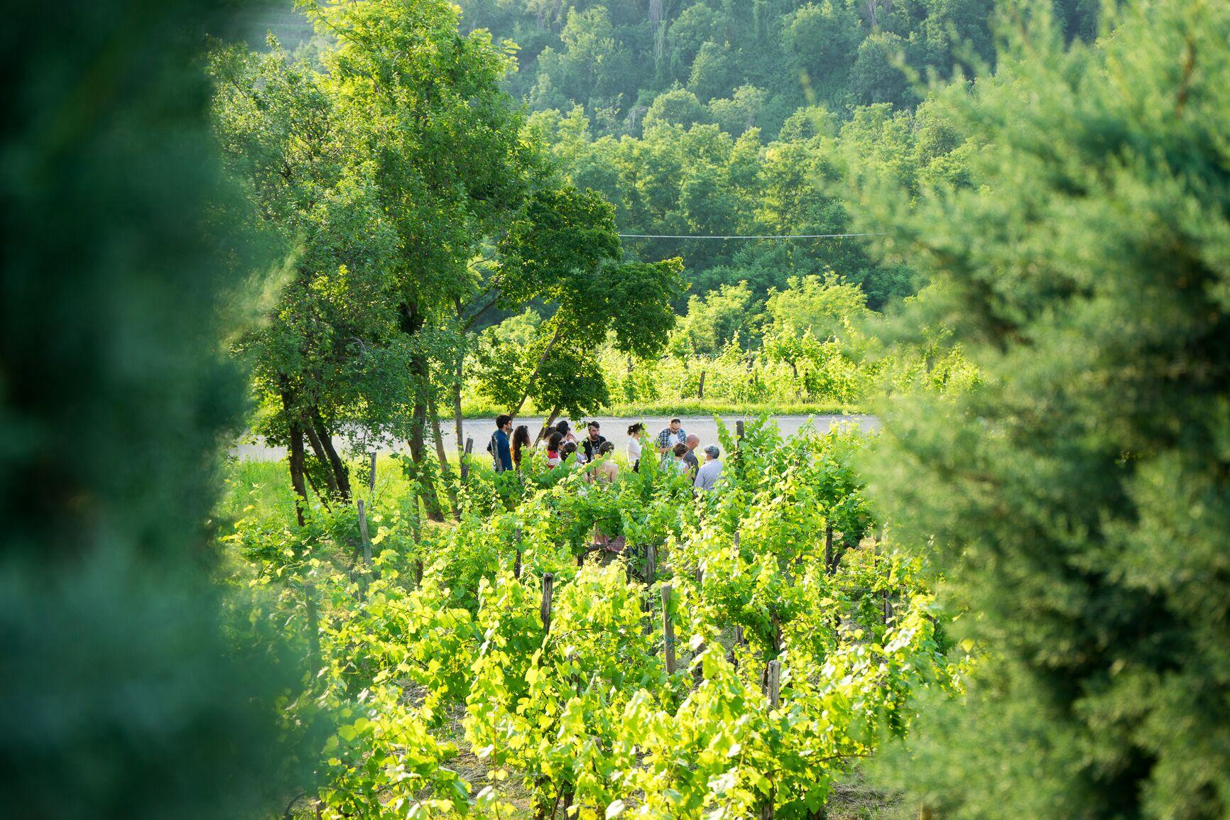 Likof 2015: Degustazione nel vigneto, San floriano del Collio - pokušnja v vinogradu, Števerjan 6.6.2015